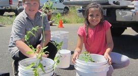 Bucket Gardening - Grand Ronde. Image courtesy of Marion-Polk Food Share. Used with permission.